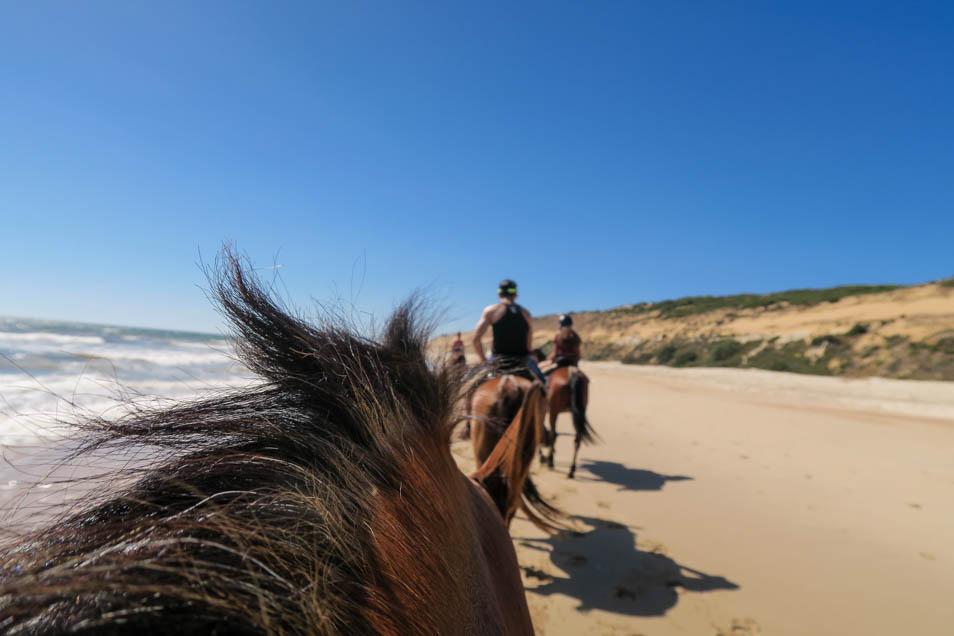 Balade à cheval sur la plage de Matalascanas en Andalousie