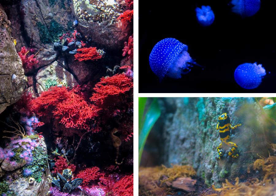 Méduses et grenouilles à l'Oceanarium de Lisbonne