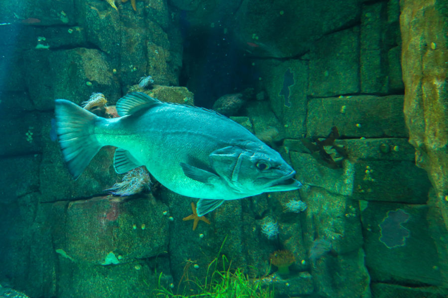 Aquarium central de l'Oceanarium de Lisbonne