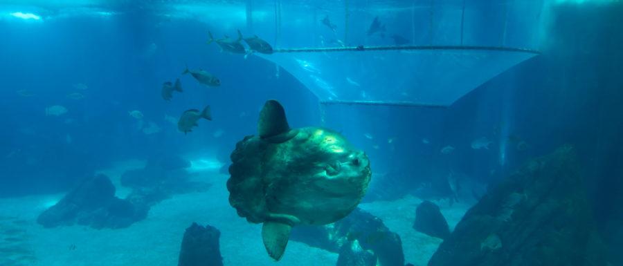 Grand bassin aquarium de Lisbonne