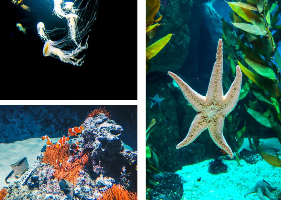 Une étoile de mer, des poissons clowns et des méduses à l'Oceanarium de Lisbonne