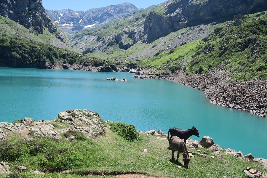 Deux ânes près du lac des Gloriettes dans les Pyrénées