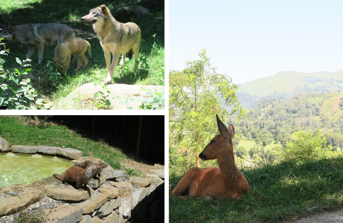 Parc animalier Pyrénées loups loutres et biches