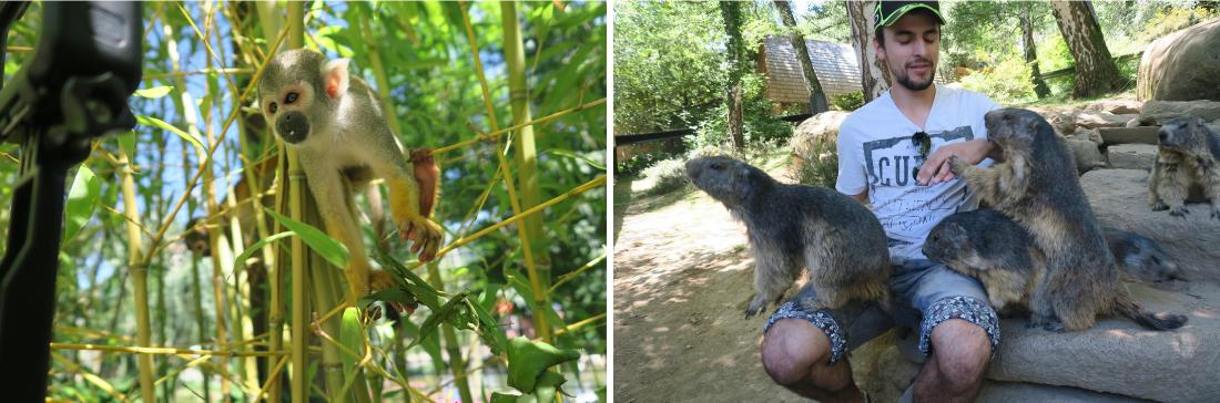 Marmottes et singes parc animalier Pyrénées