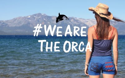 We Are The Orca : comment sauver les orques résidentes du Sud