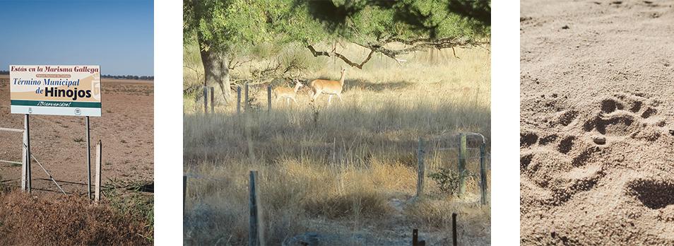 Préserver les animaux au parc national Donana