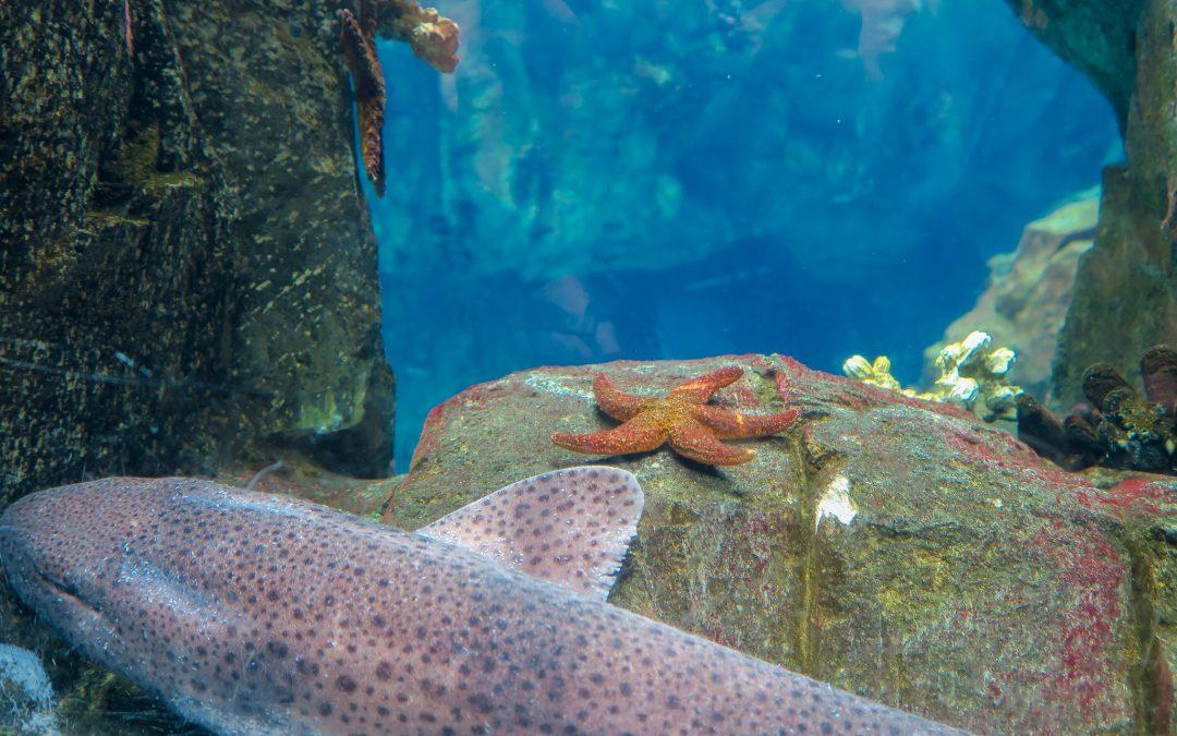 Oceanarium l'aquarium de Lisbonne