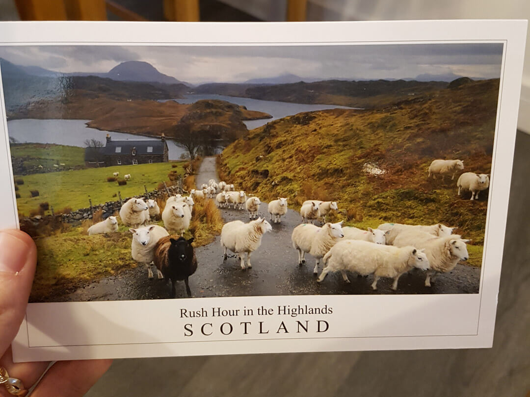 rush-hour-in-the-highlands-sheeps-on-road